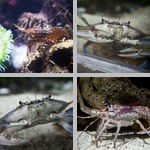 Crustaceans photographs