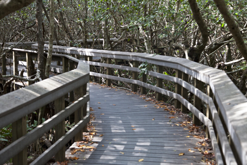 Curving Boardwalk at West Lake of Everglades National Park