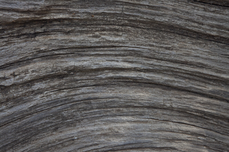 Curving Grain in Gray Wood