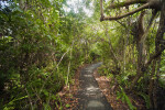 Curving Section of Gumbo-Limbo Trail