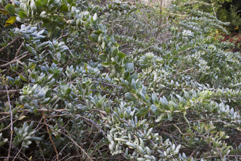 Curving Shrub Branches
