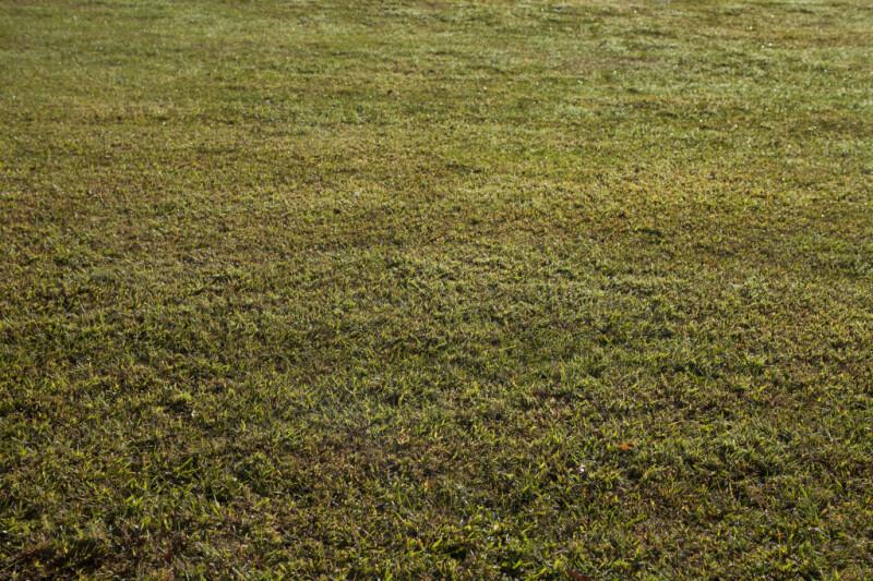 Cut Grass at Boyce Park