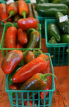 Dark Red Jalapeño Peppers at the Tampa Bay Farmers Market