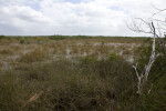 Dead Tree and Mangroves
