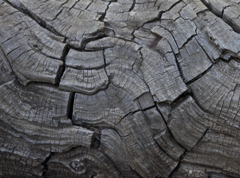Dead Wood Decay