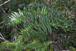 Dense Fern Coverage