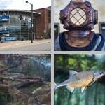 Denver Aquarium photographs