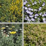 Denver Botanic Gardens photographs