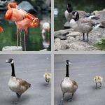 Denver Zoo photographs