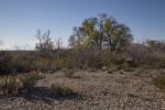 Desert Landscape Along the Chihuanhuan Desert Trail of Big Bend National Park