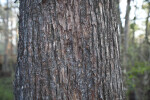 Detailed Photo of Tree Trunk Bark