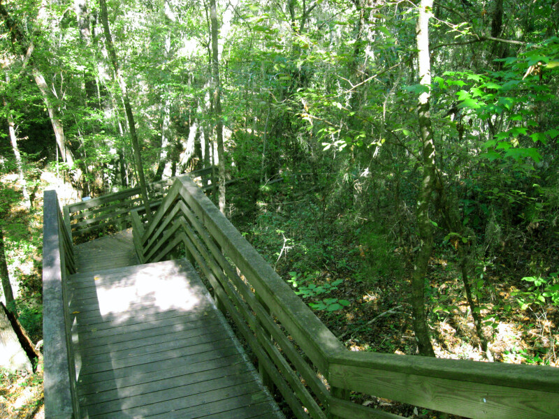 Devil's Millhopper Boardwalk