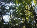 Devil's Millhopper Canopy