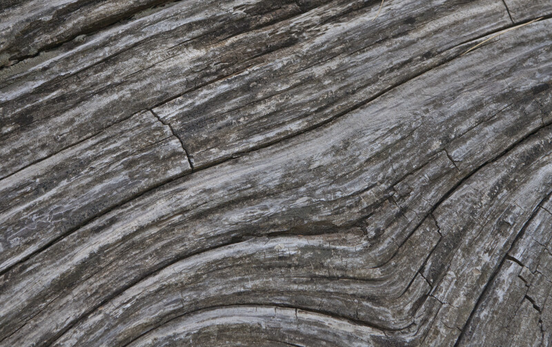 Diagonal Pattern in the Grain of Dead Wood