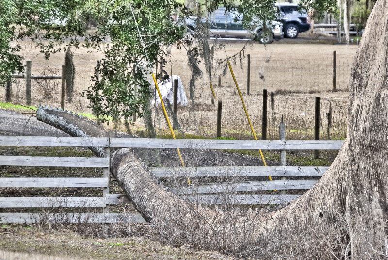 Dinosaur Tail Through Fence