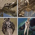 Dinosaurs photographs