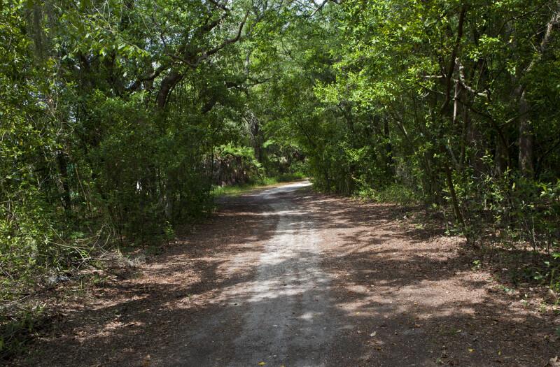 Dirt Path at USF
