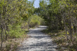 Dirt Path Leading Through Trees at Biscayne National Park