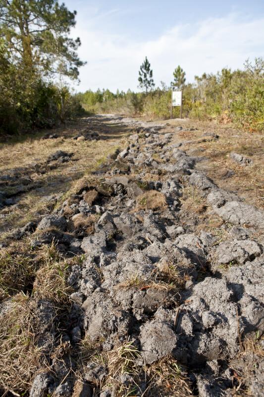 Firebreak at Cedar Key Scrub State Reserve