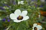 Distinct Petals and Stamens