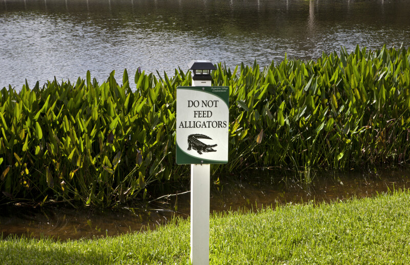 Do Not Feed Alligators