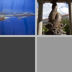 Dolphin (Mahi-Mahi) photographs