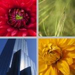 Dominant Colors photographs