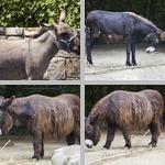 Donkeys photographs