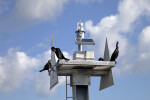 Double-Crested Cormorants Resting on a Tower