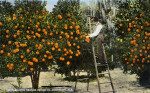 Dr. Garnett's Orange Grove