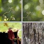 Dragonflies photographs