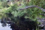 Dragonfly on Branch
