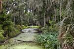 Drainage Canal with Algae