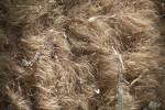 Dromedary Fur