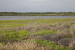 Dry and Lush Grass at Myakka River State Park