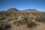 Dry Desert Shrubs Along with Mountains