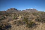 Dry Desert Shrubs Along with Mountains