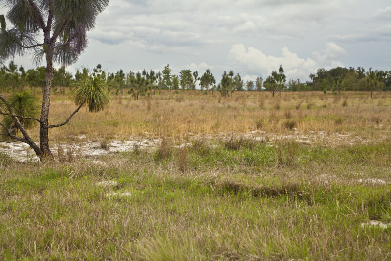 Dry Grassy Area at Circle B Bar Reserve