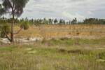 Dry Grassy Area at Circle B Bar Reserve
