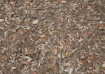 Dry Groundcover