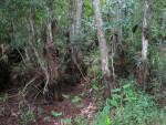 Dry Wetland