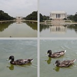 Ducks photographs