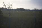 Dwarf Cypresses in Sawgrass