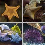 Echinoderms photographs