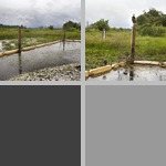 Ecological Restoration photographs