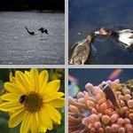 Ecology photographs