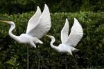 Egret Statues