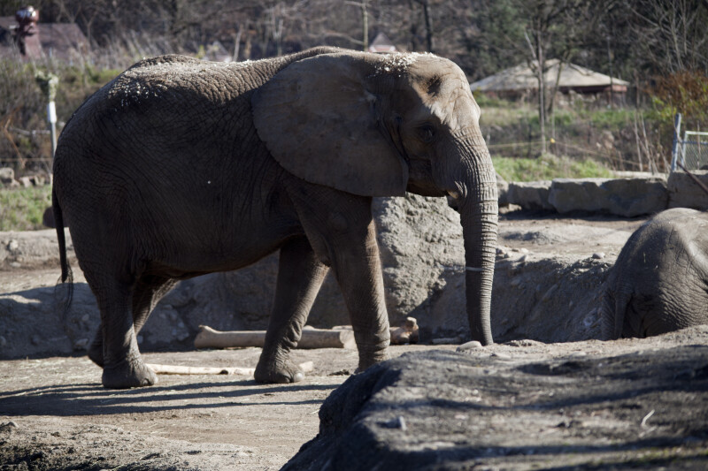 Elephant and Rocks