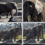 Elephants photographs