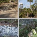 Enchanted Forest Sanctuary photographs